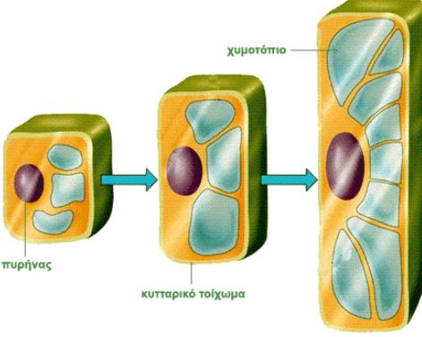 χυμοτόπια